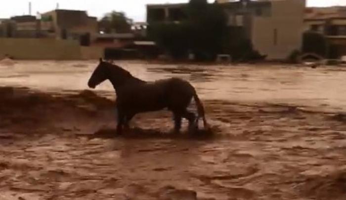 Δυτική Αττική: Καρέ – καρέ η προσπάθεια ενός αλόγου να σωθεί από χείμαρρο στη Μάνδρα (vid) | Panathinaikos24.gr