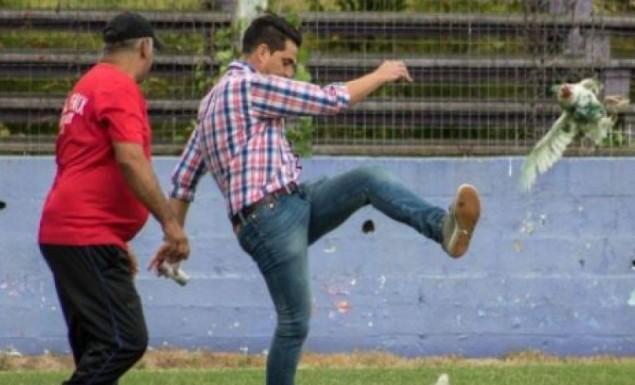 Παράγοντας ομάδας κλωτσάει κότα μέσα στο γήπεδο (vid) | Panathinaikos24.gr