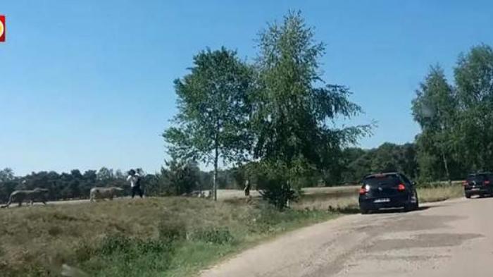 Eικόνες-σοκ: Τσιτάχ κυνηγούν Γάλλους τουρίστες σε πάρκο-σαφάρι (vid) | Panathinaikos24.gr