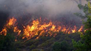 ΦΩΤΙΑ ΤΩΡΑ: Πυρκαγιά Μαραθώνα – Συναγερμός στην Πυροσβεστική