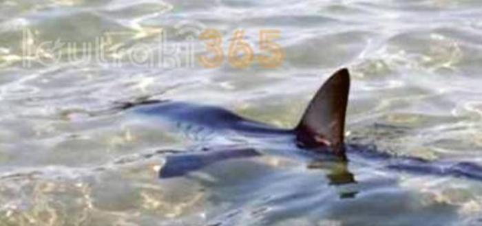 Καρχαρίας «κόβει» βόλτες στο λιμάνι του Λουτρακίου! (vids&pics)   panathinaikos24.gr