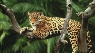 Πανικός στο Αττικο Ζωολογικό Πάρκο: Δραπέτευσαν 2 επικίνδυνα ζώα και τα σκότωσαν