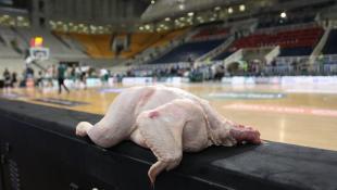 Σκληρό τρολάρισμα: Άφησαν κότα στον πάγκο του Ολυμπιακού